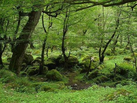 خرید و فروش ویلاهای جنگلی